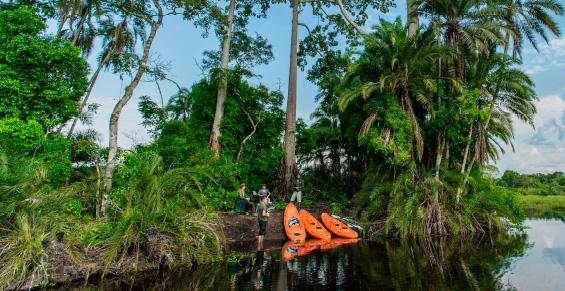 Parque Nacional de Odzala. Safari a el Congo. Sawa Expeditions