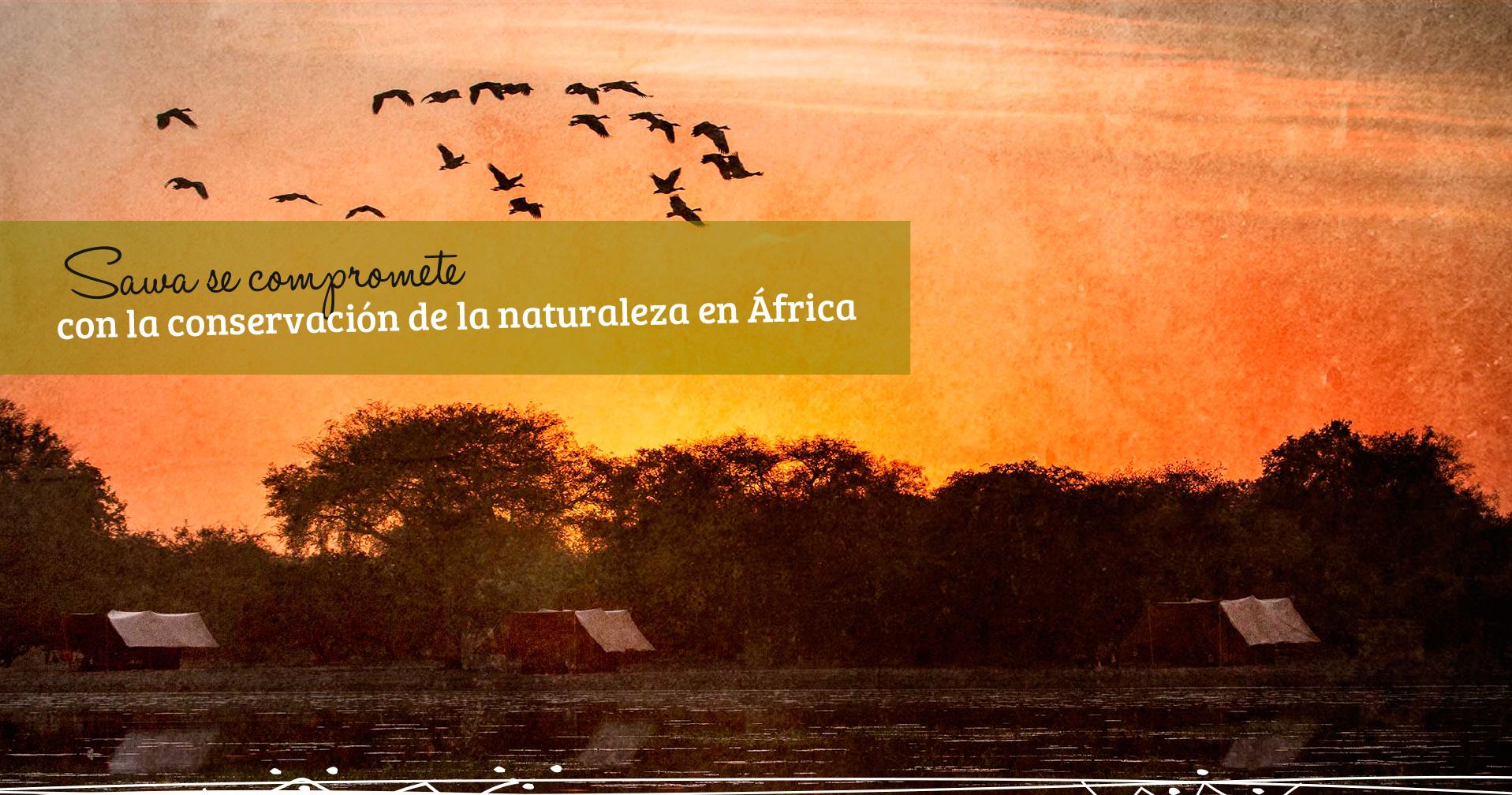 Sawa se compromete con la conservación de la naturaleza en África