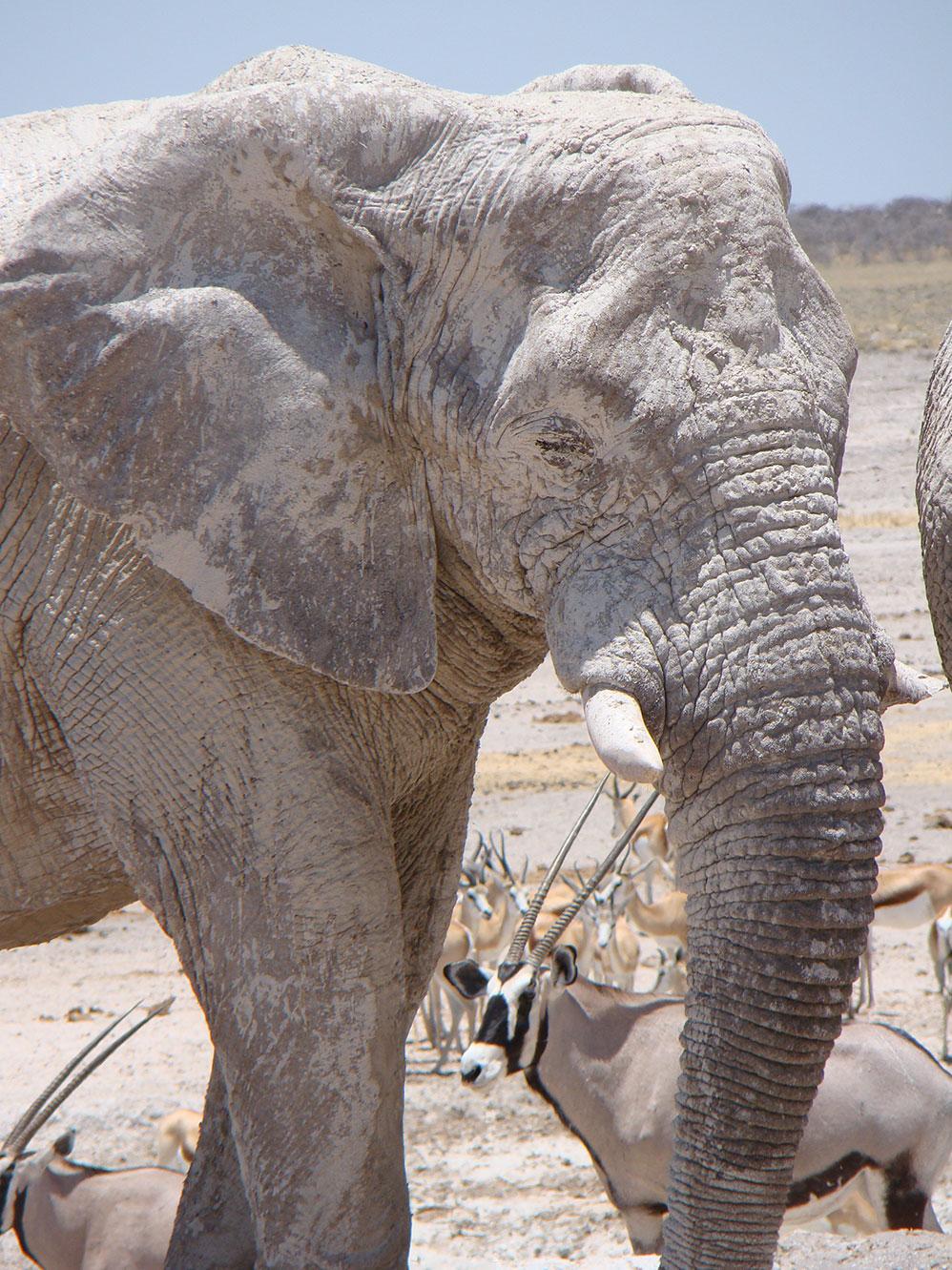imagen itinerario Namibia en grupo 02 - Sawa Expeditions