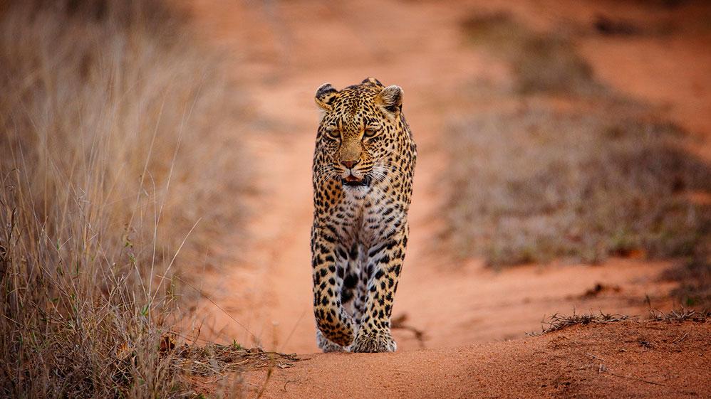 imagen itinerario Sudáfrica: Ubuntu y ruta jardín 02 - Sawa Expeditions