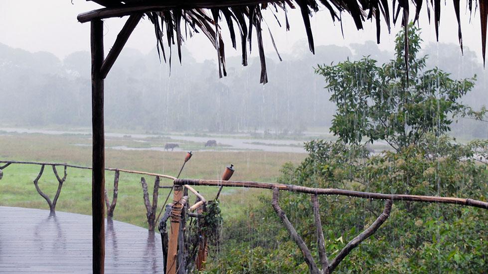 La lluvia, en el bosque lluvioso | Sawa Expeditions