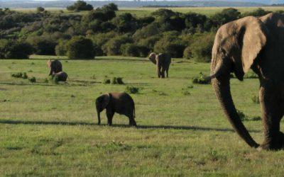 Mi experiencia en familia en África