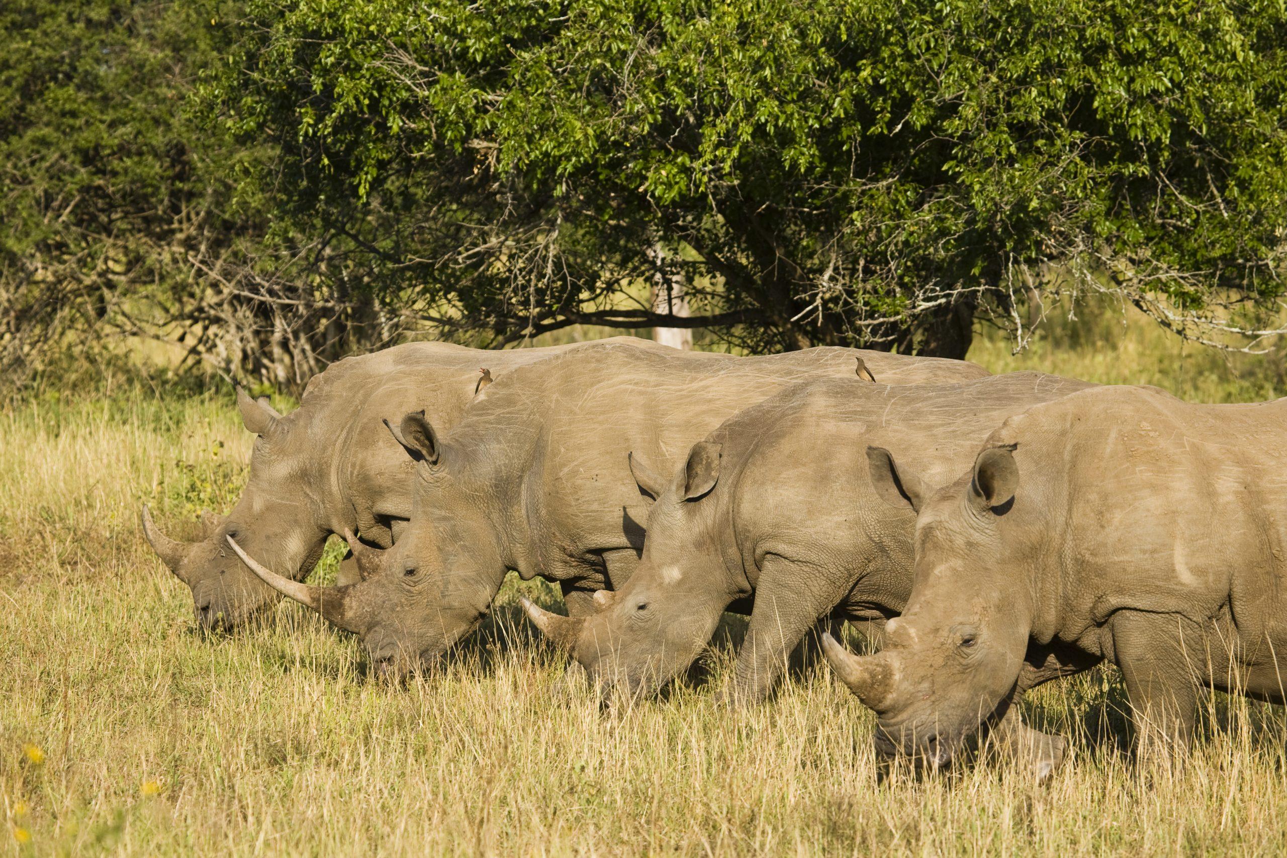 Sudáfrica. Sawa Expeditions