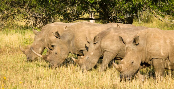 Sudáfrica - Costa Este | Sawa Expeditions
