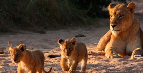 Safari a Sudáfrica: Ubuntu y ruta Jardín | Sawa Expeditions